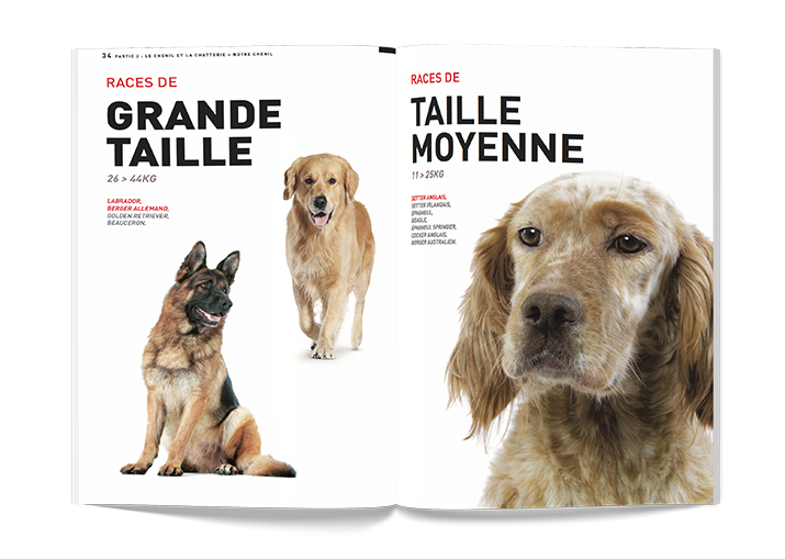 Agence Les Dissidents - Royal Canin